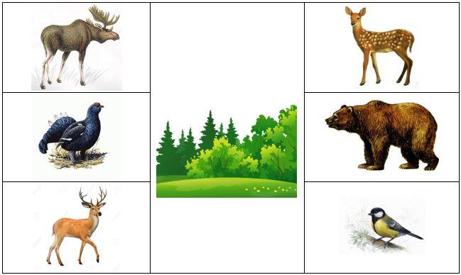 животные и птицы леса