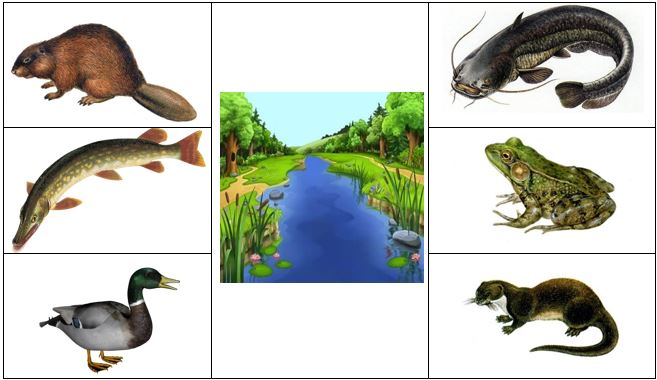 обитатели водоема
