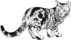 домашние питомцы, кошка
