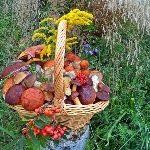 «Грибы и ягоды»