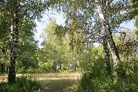 «Удивительные истории в весеннем лесу»